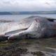 Acid Oceans Marine Extinction