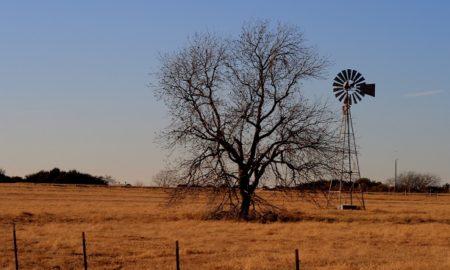 Garland Texas Shooting