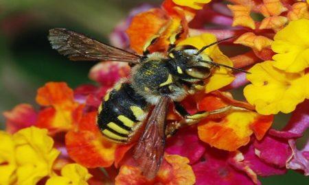 Aluminum Bee Death