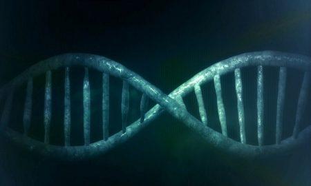 Modern Europe DNA