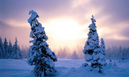 Global Warming Winter
