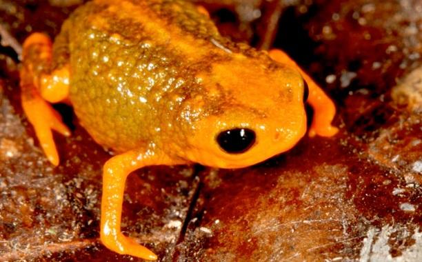 New Tiny Frog