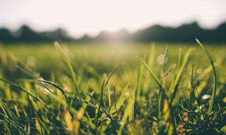 Dew On Grass, Sunny Morning