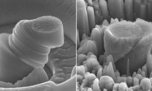 Magnesium Silicon Carbide Nanocomposite